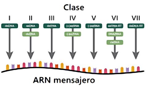 Quimicaviva Rna Virus Emergencia Y Coronavirus
