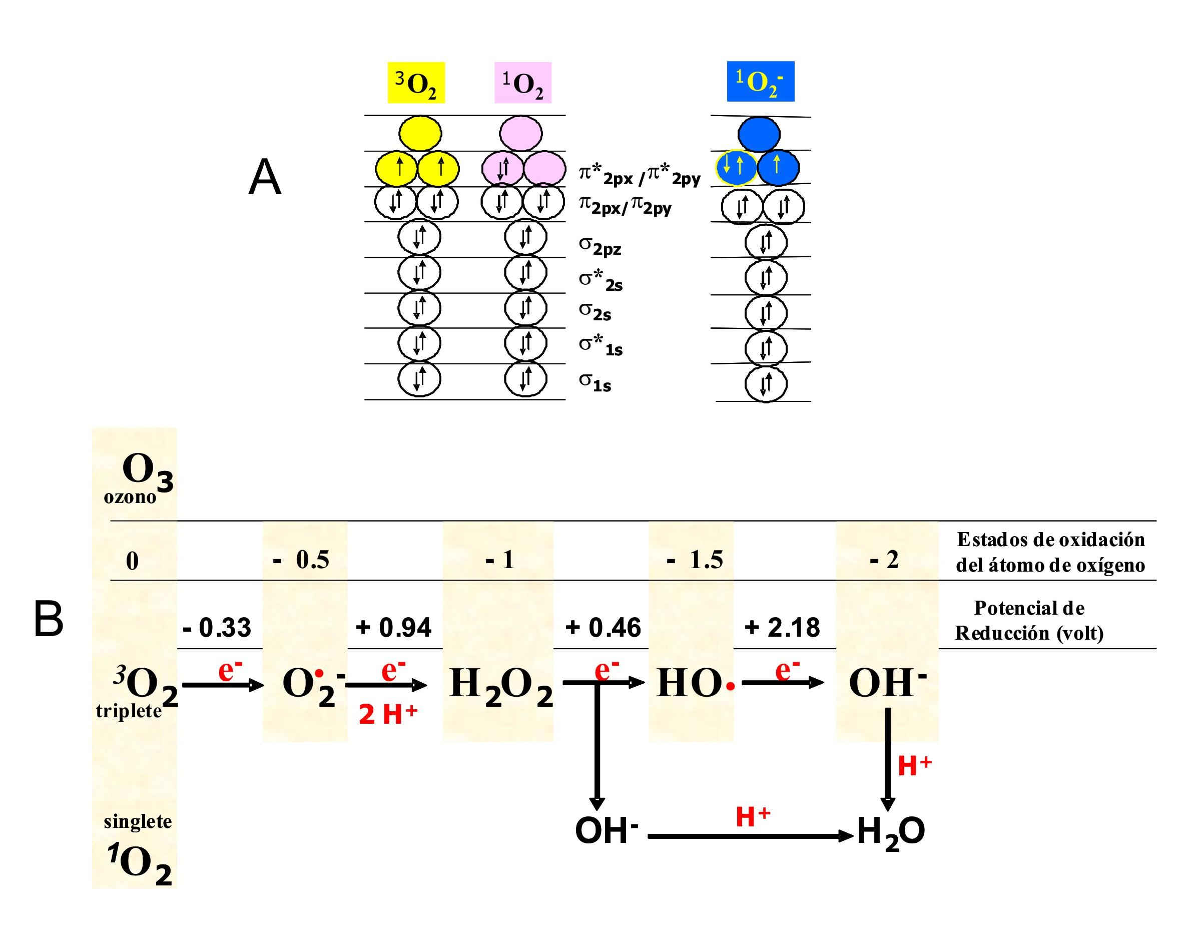 QuimicaViva vol8 num3